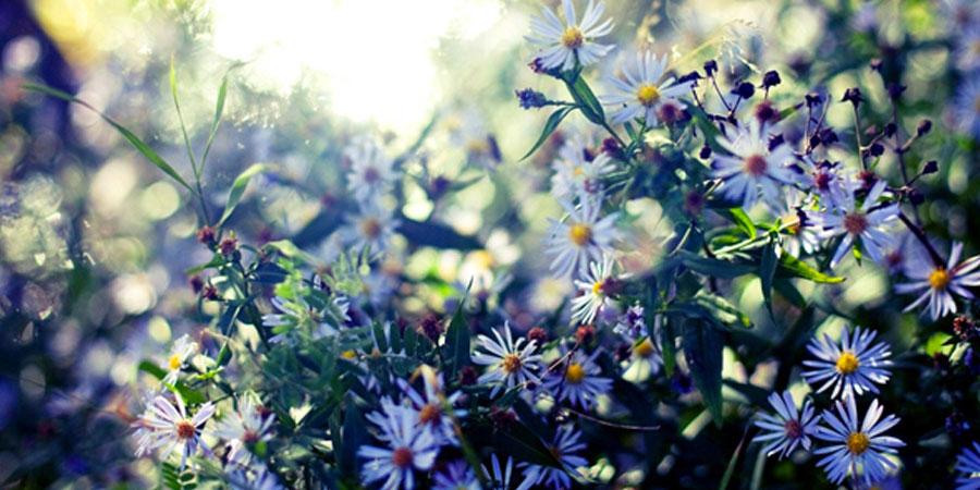 900-450-whiteflowersglow-septembert