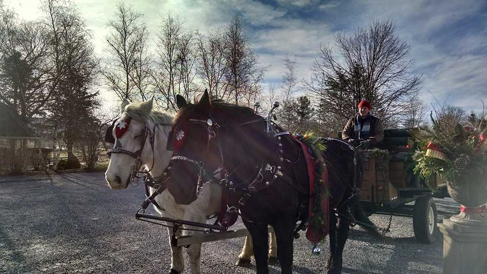 horse-and-carriage-holiday